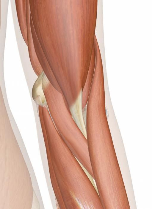 анатомия локтевого сустава венозный отток