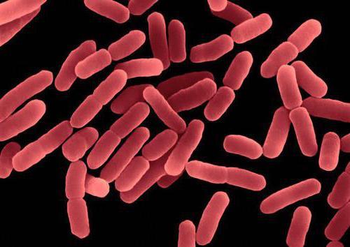 бактерии гниения