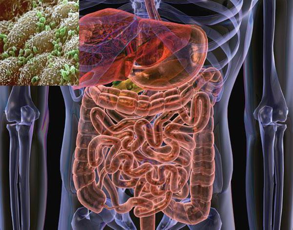 полезные бактерии названия