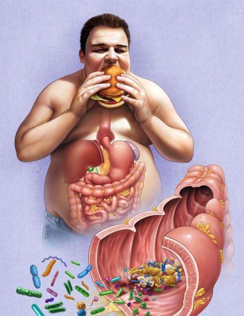 роль бактерий