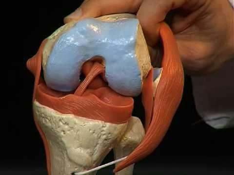 Соединение берцовой кости с коленным суставом
