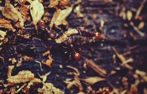 Уничтожить муравьев