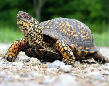 Чем кормить черепах? Советы новичкам