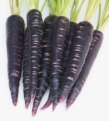 Черная морковь: древняя, полезная, вкусная
