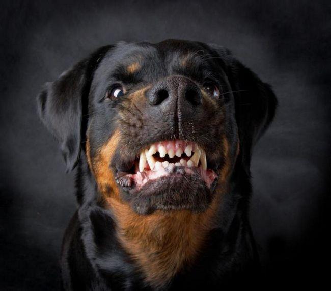 Что делать, если на вас напала собака: 5 работающих советов