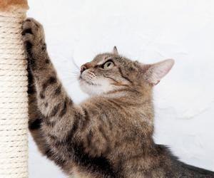 когтеточки для кошек фото