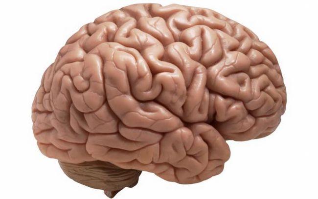 Твердая оболочка головного мозга