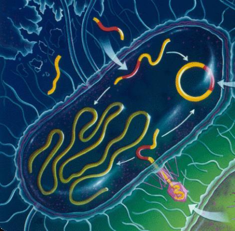царство бактерий