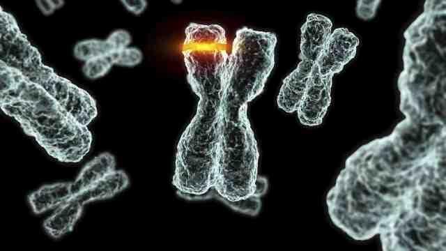 Что такое мутация?