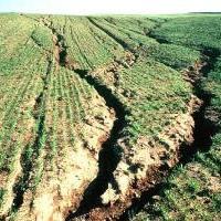 что такое почва