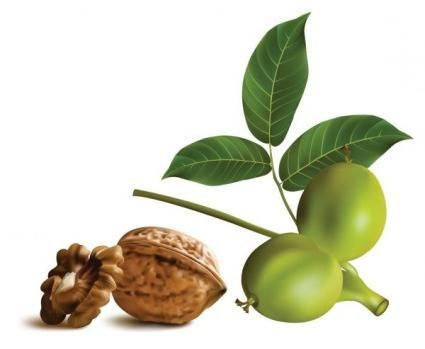 зеленый грецкий орех полезные свойства