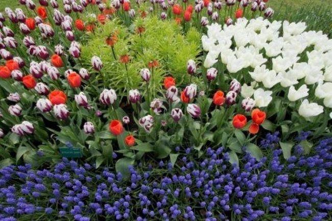 Цветы на даче с весны и до глубокой осени