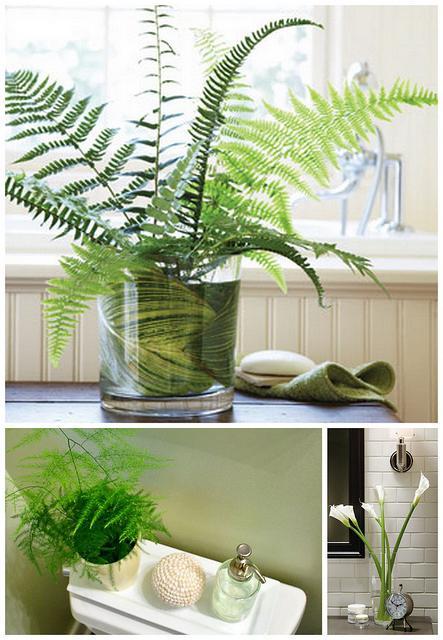 Цветы в интерьере квартиры - немаловажная деталь уюта