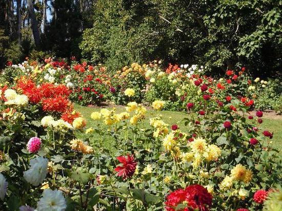 цветники в саду