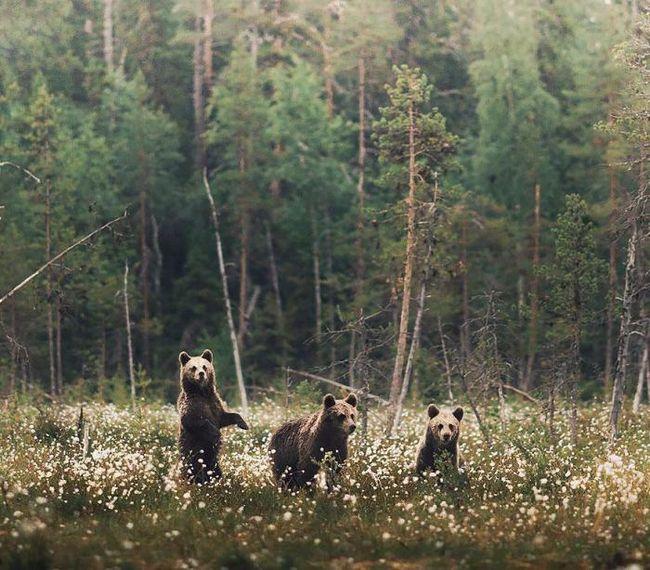 Душа леса: потрясающие снимки молодого фотографа из финляндии