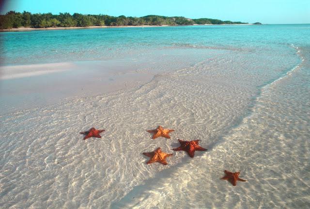 Есть ли морские звезды в болгарии?