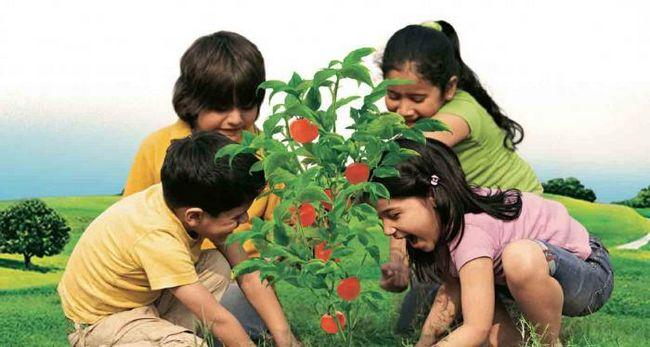 загадка про помидор для детей