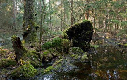 болотный газ формула и применение