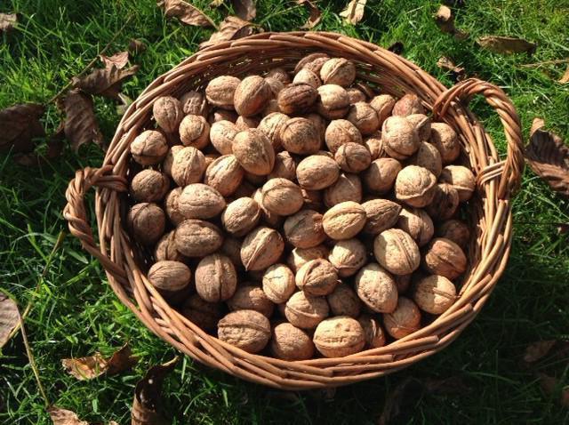 грецкий орех химический состав