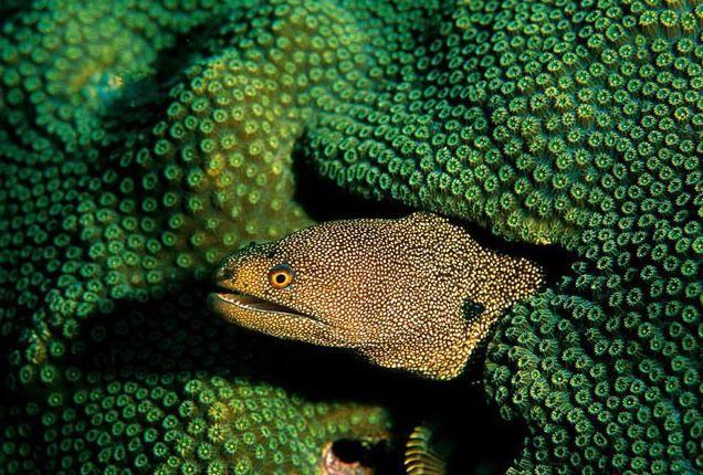 хищная пресноводная рыба
