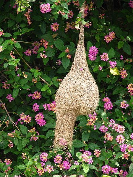Идеи для подарка: как сделать гнездо своими руками?