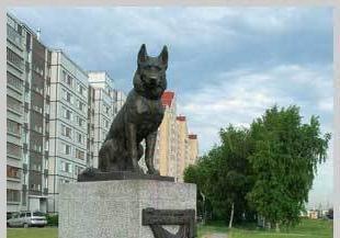 Известные памятники собакам в россии и не только