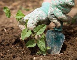 борьба с сорняками на газоне