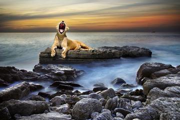 к чему снился лев