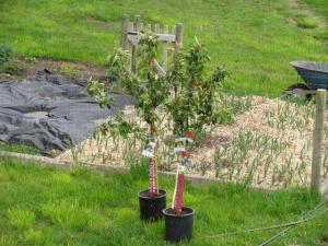 в каком месяце лучше сажать саженцы плодовых деревьев