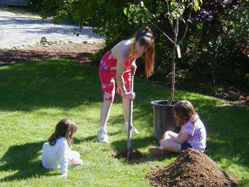 в каком месяце сажать саженцы плодовых деревьев