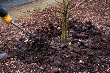 в каком месяце сажать саженцы плодовых деревьев весной
