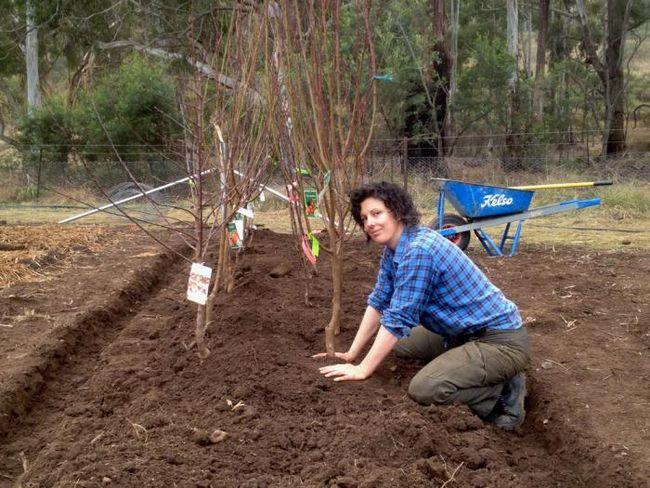 когда сажать саженцы плодовых деревьев месяц