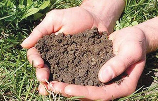 как можно улучшить плодородие почвы