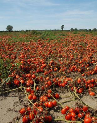 условия плодородия почвы