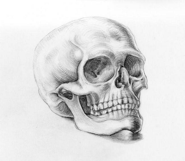 Как нарисовать череп, соблюдая пропорции?