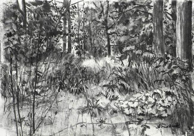 как нарисовать лес карандашом
