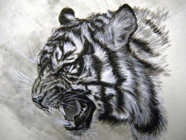 Как нарисовать тигра шаг за шагом
