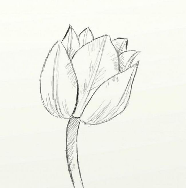 Как нарисовать тюльпан за пять минут?