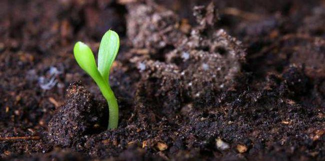 как образовалась почва
