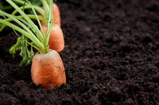 как образуется перегной почвы