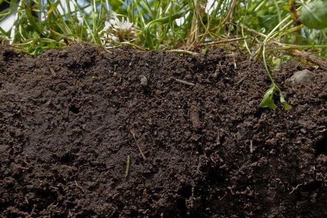 процесс образования почвы