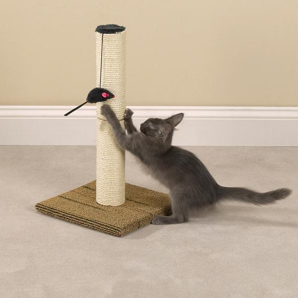 как отучить кошку царапать обои