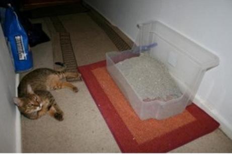 Как отучить кота гадить в неположенном месте: полезные советы