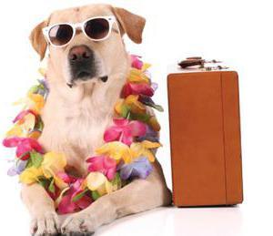 Что нужно для перевозки собаки в поезде