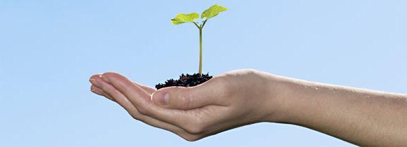 Как построить дерево целей организации?