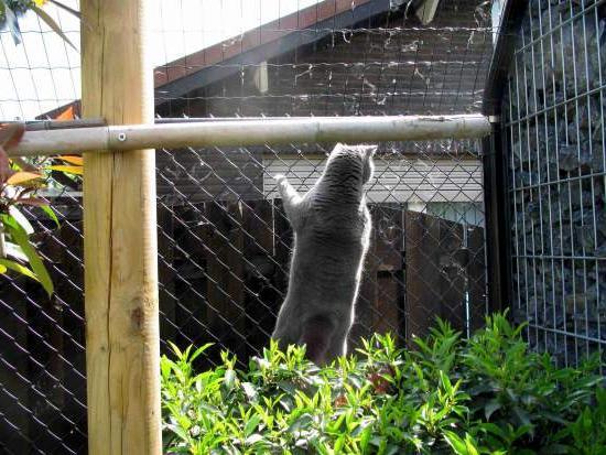 Как построить забор своими руками из сетки-рабицы