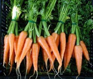 как правильно садить морковь