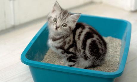 Как приучить котят к туалету? Полезные советы