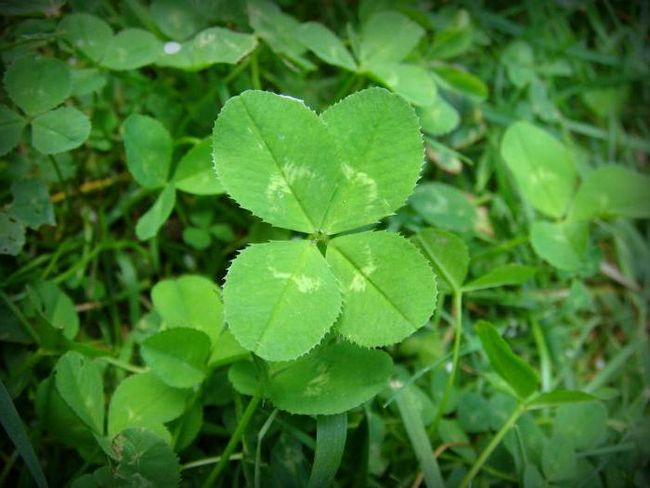 как привлечь удачу и везение
