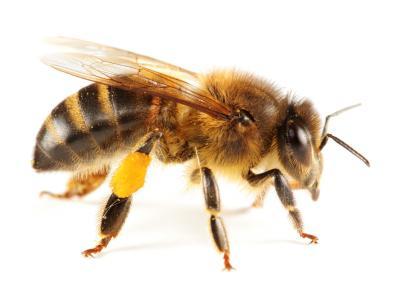 Как проверить мед на натуральность и не купить подделку?